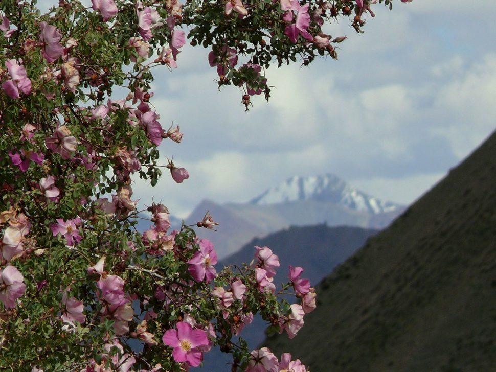 Hory a růže a co k tomu patří