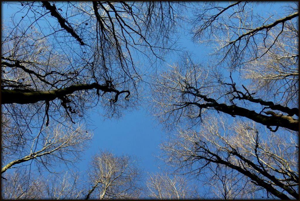 Stromy anebe nad hlavou